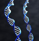 2 double helix strands of DNA with Dark background.