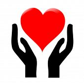 pic of hand heart  - hands holding the heart  - JPG
