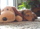 pic of stuffed animals  - A close - JPG