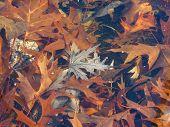 Fall Leaves Underwater