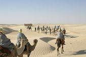 Tourists Riding Camels In Sahara Desert poster