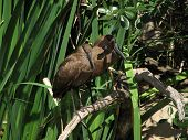 Hammerkops Birds