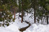 Winter forest stream