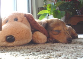 foto of stuffed animals  - A close - JPG