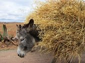 Domestic donkeys in rural setting