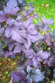 Shrubbery with violet sheet