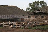 Aging Farm