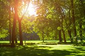 Summer Landscape With Colorful Summer City Park And Deciduous Green Trees In Sunny Weather - Sunny S poster