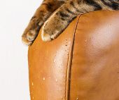 Scratches From Cat Claws On Leather Furniture. Cats Paws Close-up. poster
