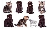 Scottish Straight And Scottish Fold Kitten With Shopping Basket. Collection Of Funny Playful Cat Kit poster