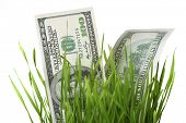 Fresh grass and dollars isolated on white