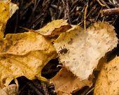 Valiente protección protección hormiguero