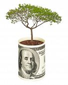 Tree  Growing From Dollar Bill