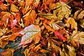 Autumn Leaf Salad