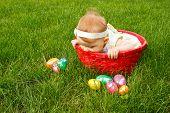 Easter Baby In Basket Peek