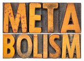 metabolism - isolated word abstract in vintage letterpres wood type poster
