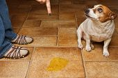 stock photo of linoleum  - Old dog being scolded beside it - JPG