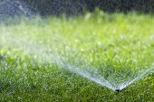 Lawn Water Sprinkler Spraying Water Over Grass In Garden On A Hot Summer Day. Automatic Watering Law poster