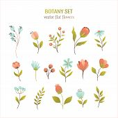 Vector Flower Simple Flat Botany Collection Isolated On White Background. Set Of Floral And Herb Ele poster
