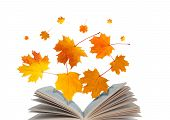 Open Book And Maple Leaves