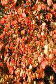 Red laat op een kleine boom met forest op achtergrond