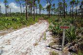 Scrub Jay Campsite Trail