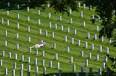 image of arlington cemetery  - Washington DC  - JPG