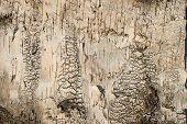 Birchs Bark