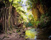 Strangler Fig Vines And Riverbanks In Costa Rica