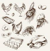 chicken breeding