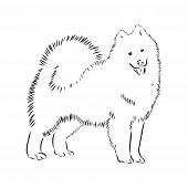 Samoyed Dog Breed Vector Illustration From The Dog Show Sign Symbol Set. Working Dogs Breed From Sib poster