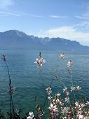 stock photo of montre  - The embankment of lake Geneva in Montreux Switzerland - JPG