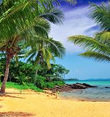 Sand, palm trees and sea