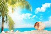 Tropical landscape,Seashell on beach.