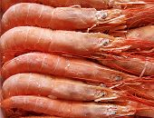 Frozen Shrimps.