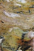 Pilbara stromatolites - the oldest evidence for life on Earth
