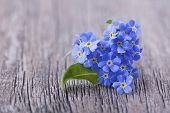 Forgetmenot flowers in heart shape on a wooden background