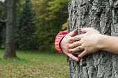 Hands Around Tree