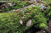 Moss Wrapped Broken Tree Closeup
