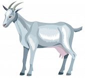 gray goat with horns - vector illustration