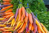 Bunches Organic Rainbow Carrots