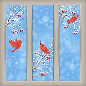 stock photo of rowan berry  - Vertical Christmas banners with birds Rowan tree branches and berries in frost snowflakes bokeh elements on blue abstract background - JPG