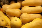 stock photo of butternut  - Fresh yellow butternut squash for sale in produce market - JPG