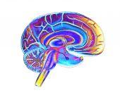 Brain 3 Diff Woverlay