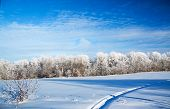 stock photo of arctic landscape  - beautiful winter rural landscape with the blue sky and the wood - JPG