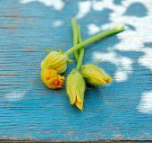 Three Zucchini Flowers