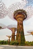 Super Trees In Gardens By The Bay Singapore