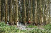 Flooled Indigo Forest