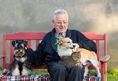 picture of lap  - Senior man with dogs and cat on his lap on bench - JPG