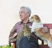 stock photo of lap  - Senior man with dog and cat on his lap on bench - JPG